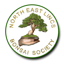 North East Lincs Bonsai Society Logo